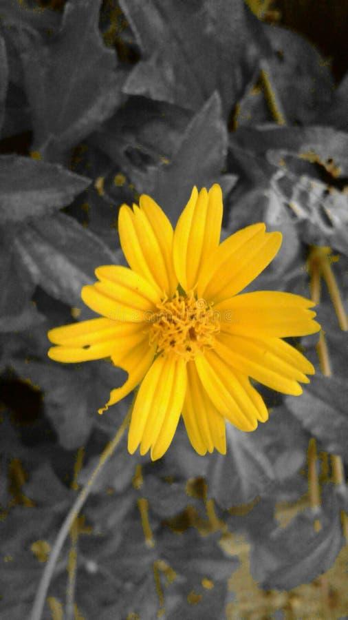 La flor royalty free stock images
