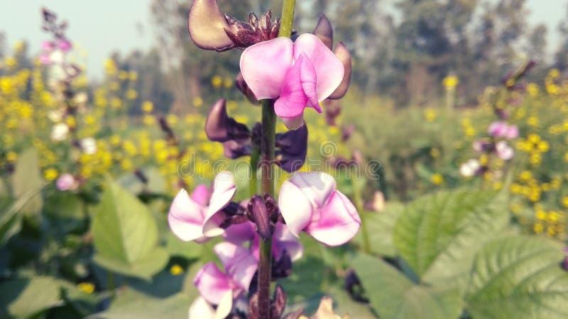La flor natural fotografía de archivo