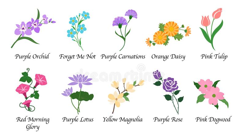 La flor orgánica del jardín botánico de la naturaleza aisló la colección del vector libre illustration