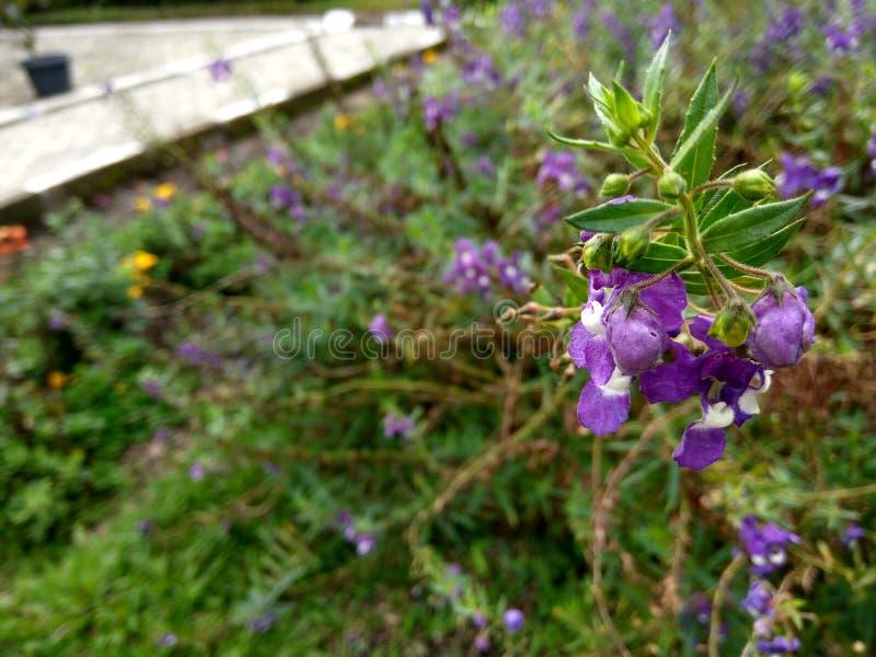 La flor púrpura foto de archivo