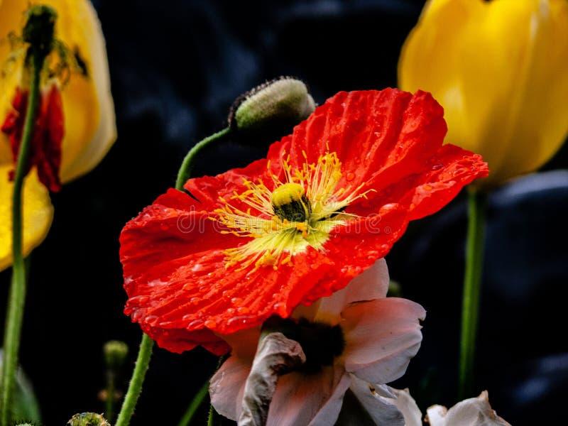 La flor se descolora en oscuridad fotos de archivo libres de regalías