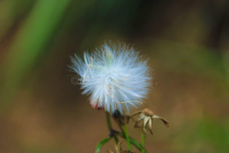 La flor solitaria imagenes de archivo