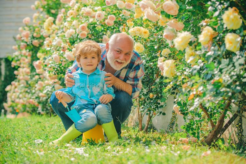 La flor subió cuidado y riego Abuelo con el nieto que cultiva un huerto junto Actividad que cultiva un huerto con el niño y imagenes de archivo