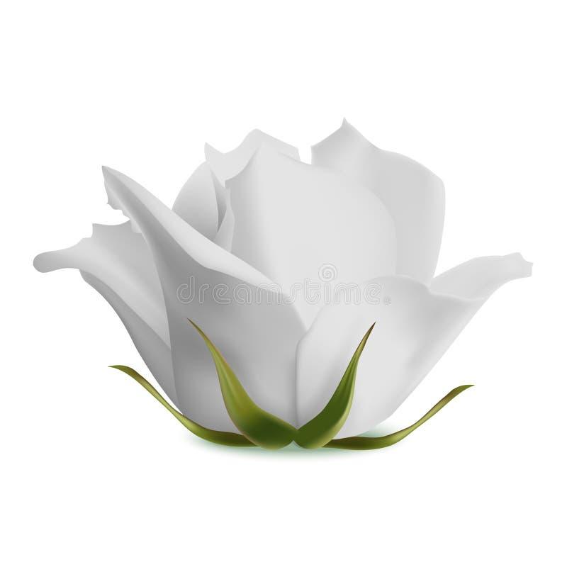 La floración blanca subió en un fondo blanco Ilustración del vector stock de ilustración