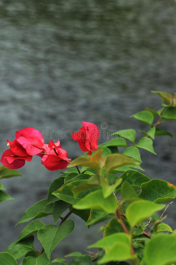 La floración de la flor fotografía de archivo