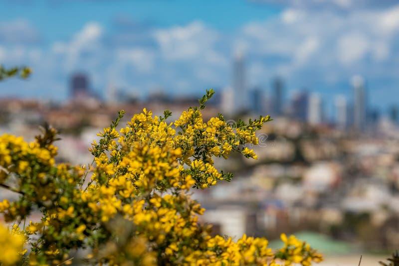 La floración florece con el horizonte borroso de San Francisco en el backg fotografía de archivo libre de regalías