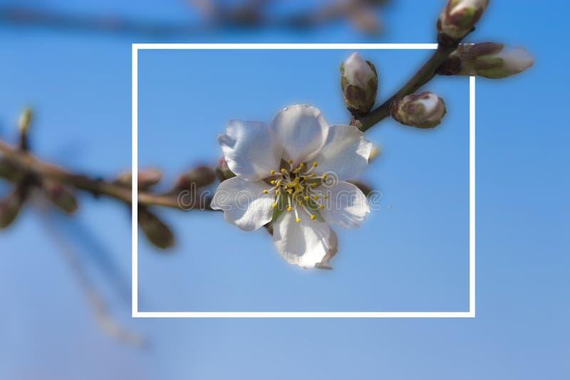 La floración florece en las ramas de los árboles frutales en el jardín adentro foto de archivo libre de regalías