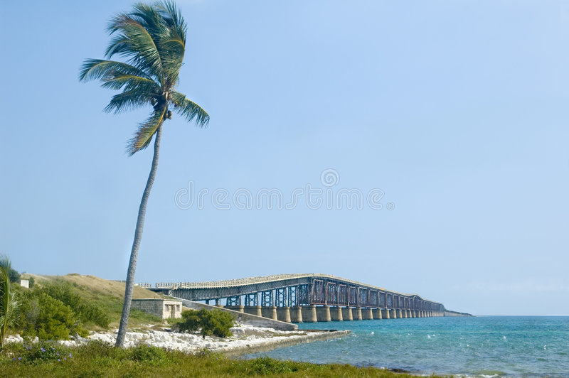 La Florida afina el puente con la palma imagen de archivo