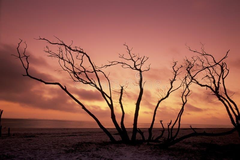 La Floride photographie stock libre de droits
