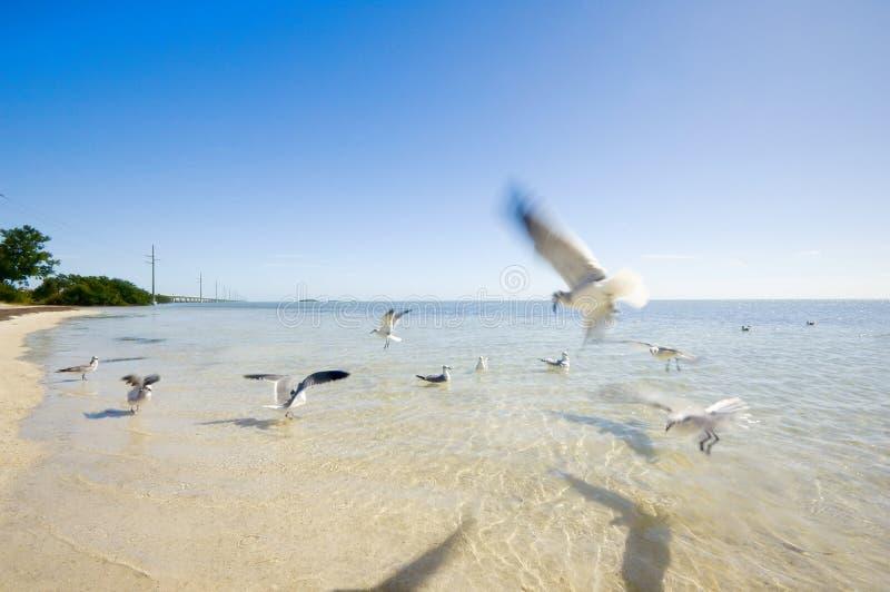 La Floride - clés de la Floride photo libre de droits
