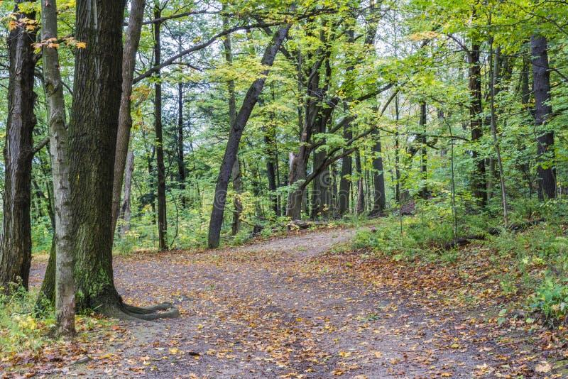 La foglia arancio ha riguardato la bobina del sentiero per pedoni del terreno boscoso con l'autunno per immagini stock libere da diritti