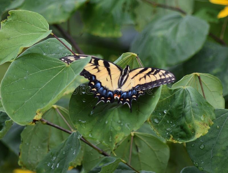 La foglia cade la farfalla immagine stock