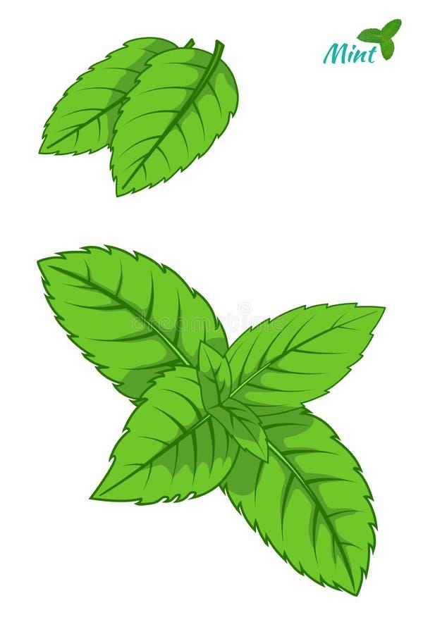 La foglia della menta, foglie verdi della menta piperita ha messo isolato illustrazione di stock