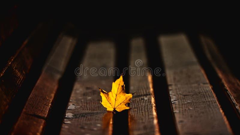 La foglia dorata al sole fotografia stock
