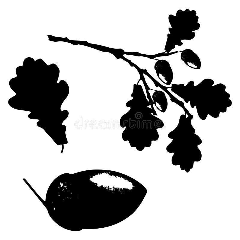 La foglia, la ghianda ed il ramo della quercia hanno isolato la siluetta, l'ecologia stilizzata illustrazione di stock