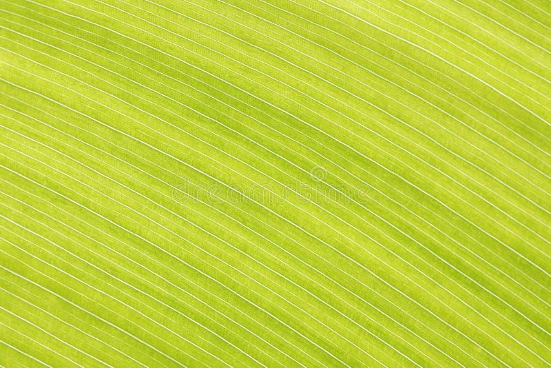 La foglia verde astratta allinea la struttura del fondo immagine stock