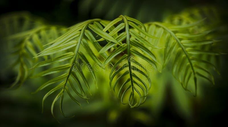 La foglia verde - bellezza della natura immagini stock libere da diritti
