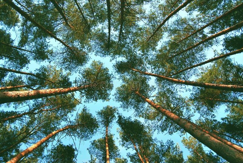 La forêt photo stock