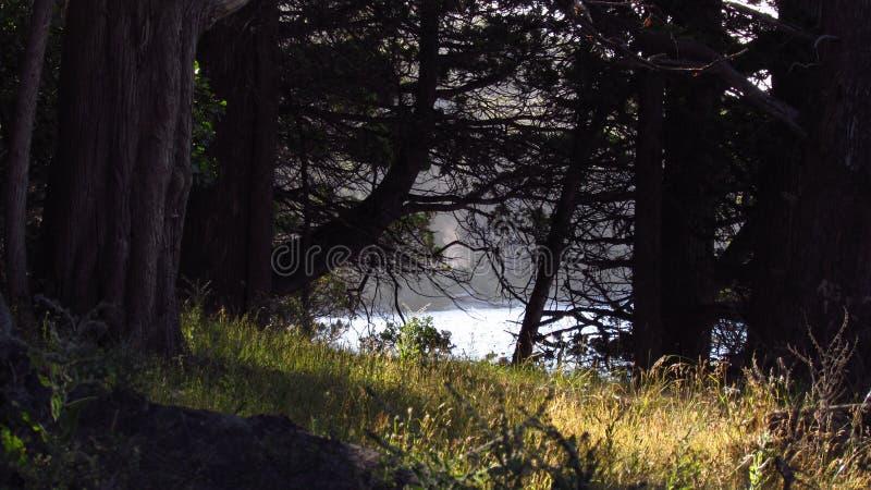 La forêt image libre de droits