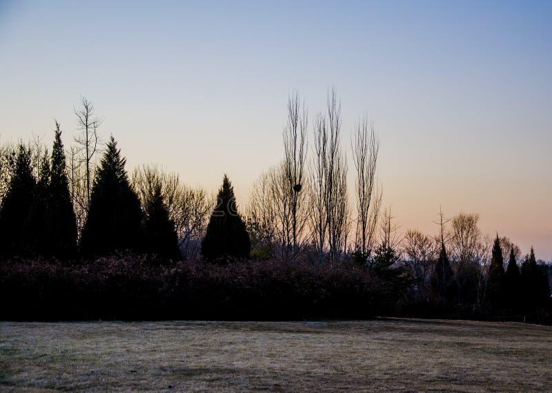 La forêt au coucher du soleil image libre de droits