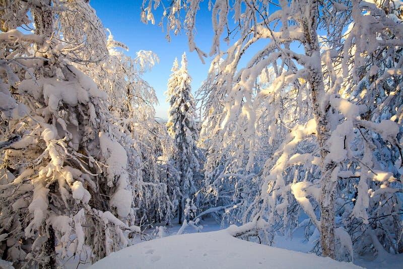 La forêt d'hiver images stock