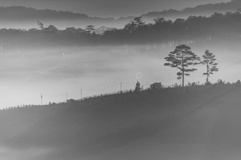 La forêt dans l'aube photo libre de droits