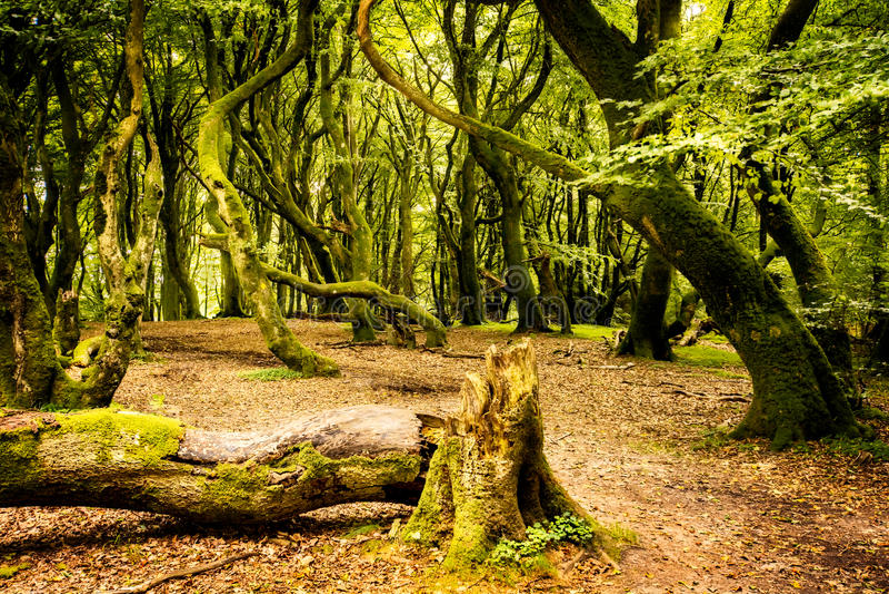 La forêt de Troll photographie stock libre de droits