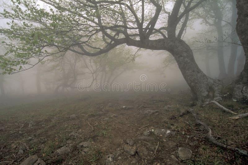 La forêt du regain photos libres de droits