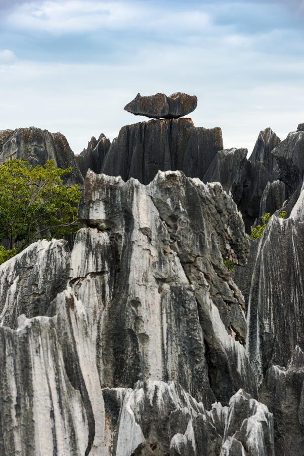 La forêt en pierre photos libres de droits