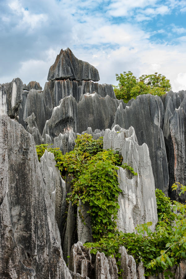 La forêt en pierre photo stock