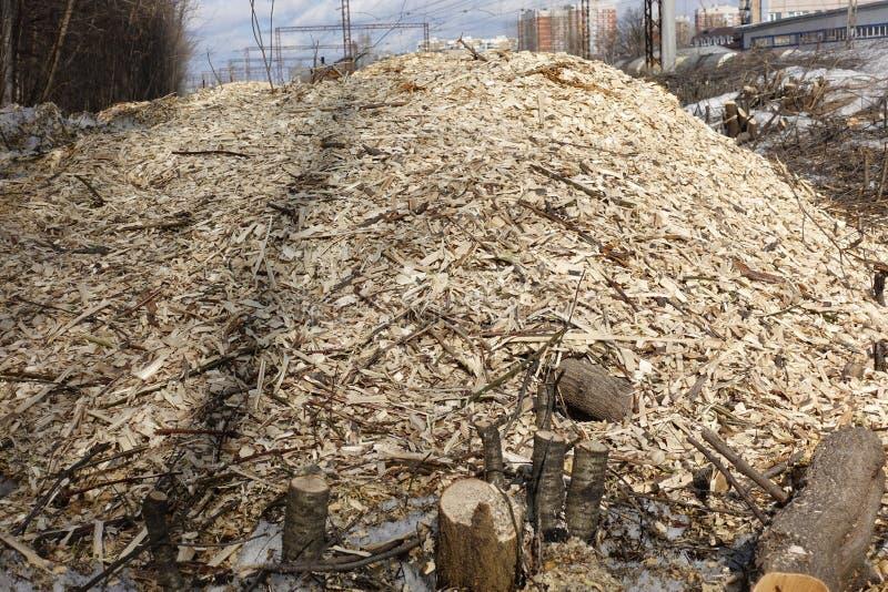 La forêt est détruite par les enregistreurs L'espace vide sans arbres avec des tronçons et des rubans photographie stock