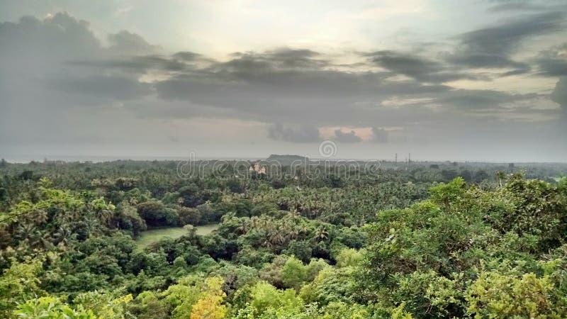La forêt est simplement belle photos libres de droits