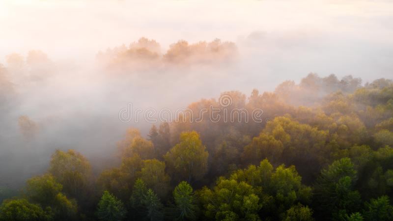 La forêt et le lever de soleil de silhouette d'automne sont le brouillard de cause, séance photos par le bourdon photos stock
