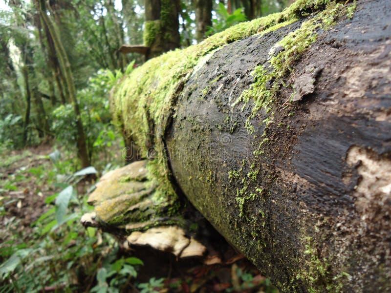 La forêt et sa biodiversité jamais-abondante image stock