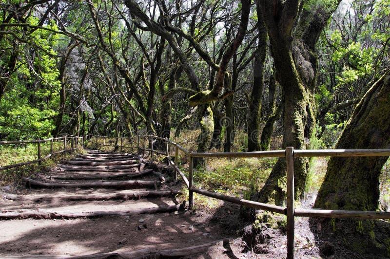La forêt humide en La Gomera, canari, Espagne image stock