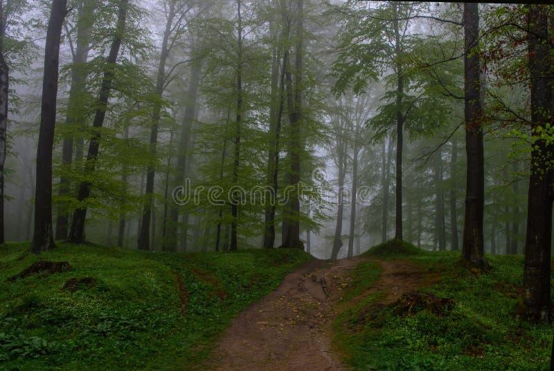 La forêt mystérieuse photographie stock libre de droits