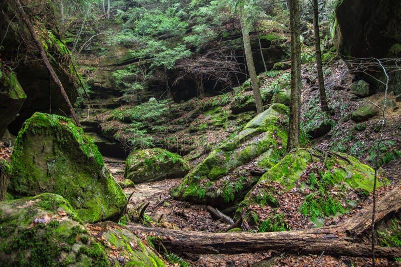 La forêt mystique photographie stock libre de droits