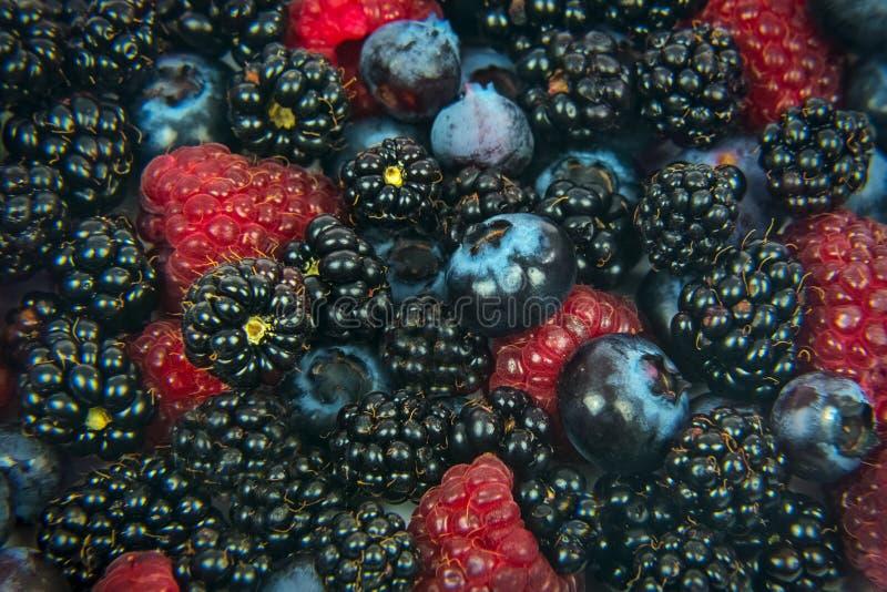 La forêt porte des fruits fond images libres de droits