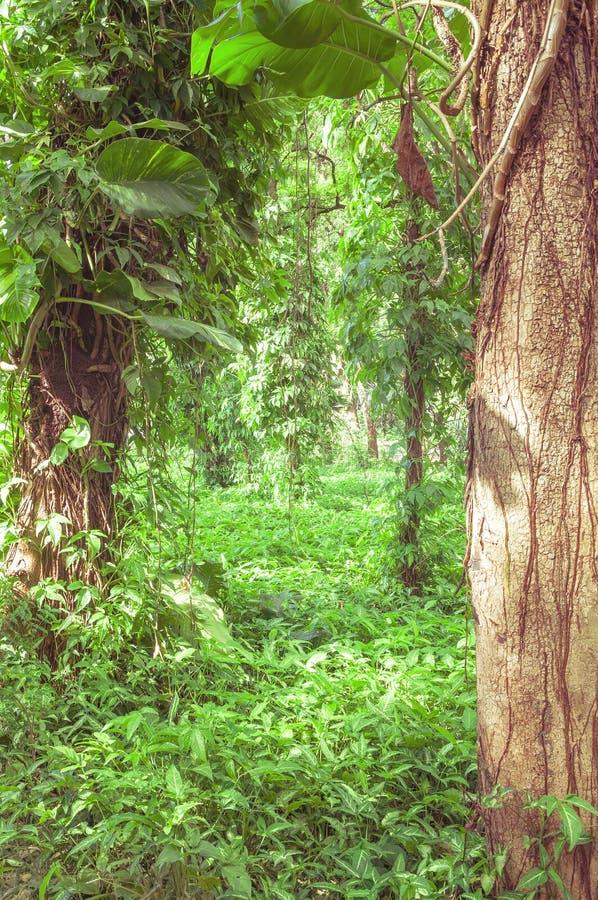 La forêt a rempli d'arbres et de végétation verte tout autour photos libres de droits