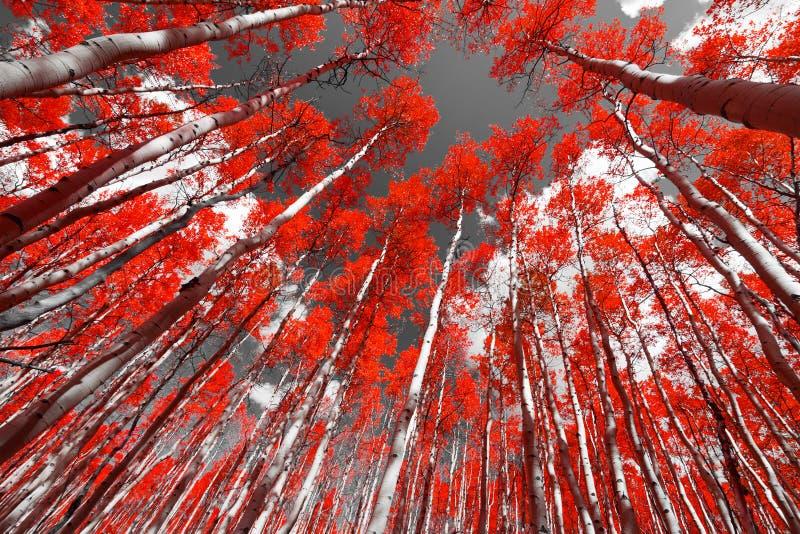 La forêt rouge image stock