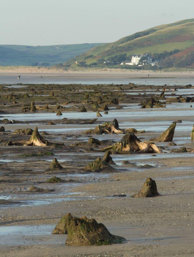 La forêt submergée de Borth sur la côte ouest du pays de Galles images stock