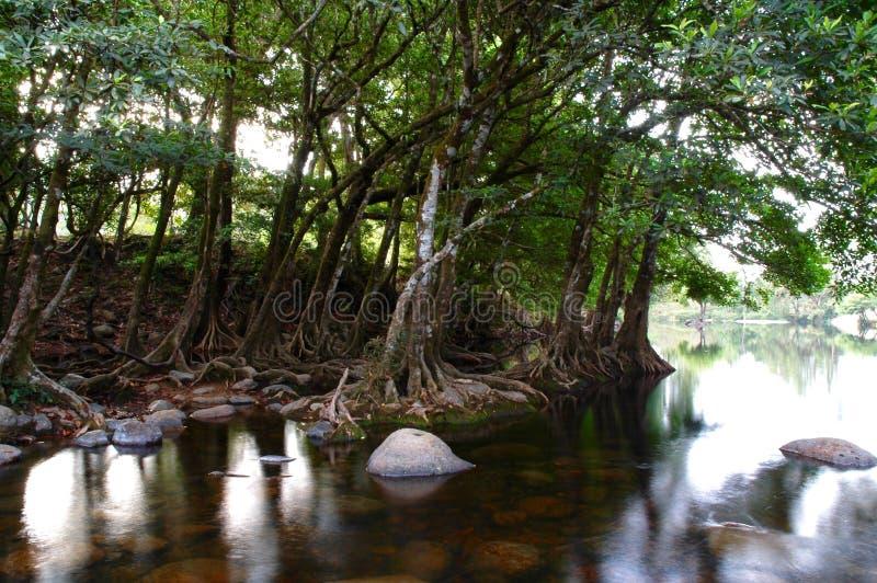 La forêt tropicale images libres de droits