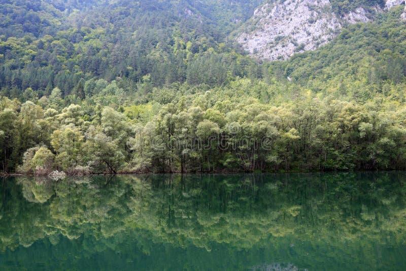 La foresta è riflessa nel fiume fotografia stock libera da diritti