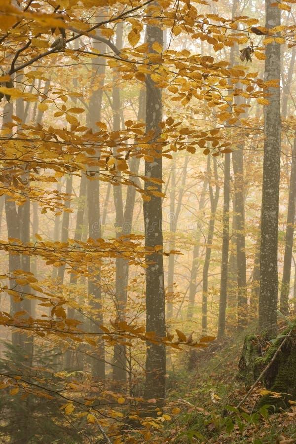 La foresta fotografia stock libera da diritti