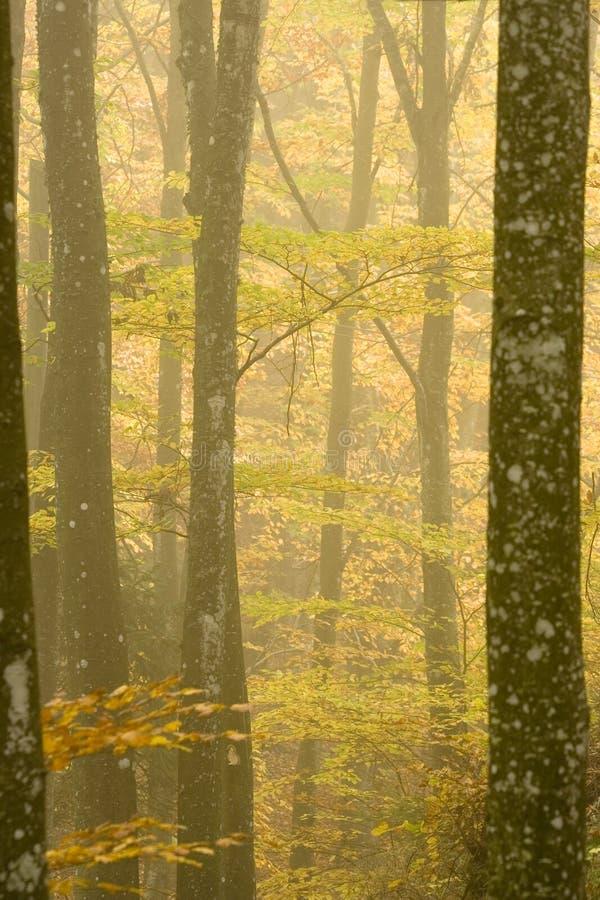 La foresta immagini stock libere da diritti