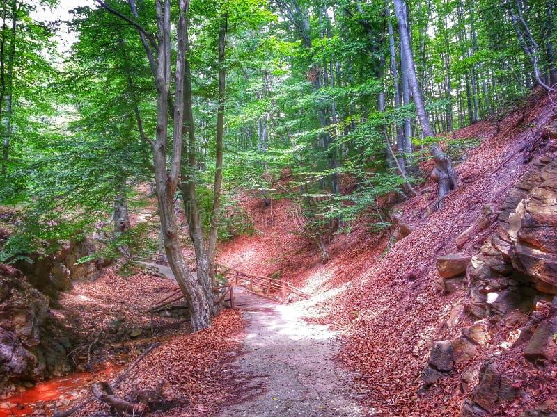 La foresta - 1 fotografia stock libera da diritti