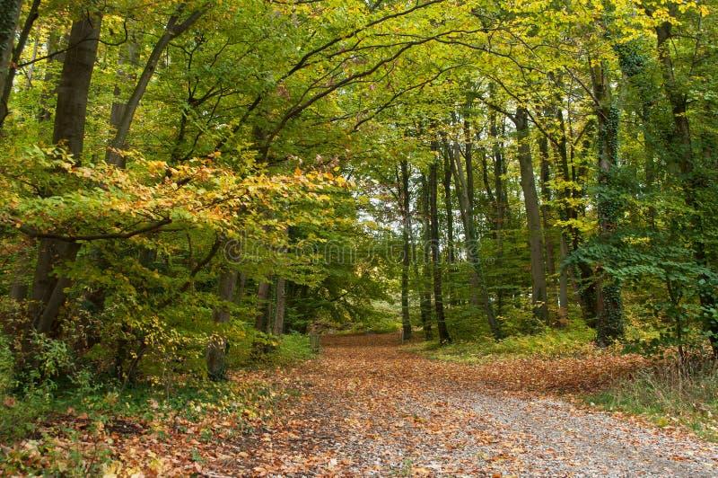 La foresta in autunno immagine stock