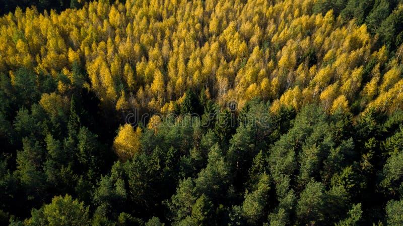 La foresta di autunno dei pini ed altri alberi che sono segni ed hanno creato un umore accogliente dell'autunno magico Fucilazion immagine stock libera da diritti