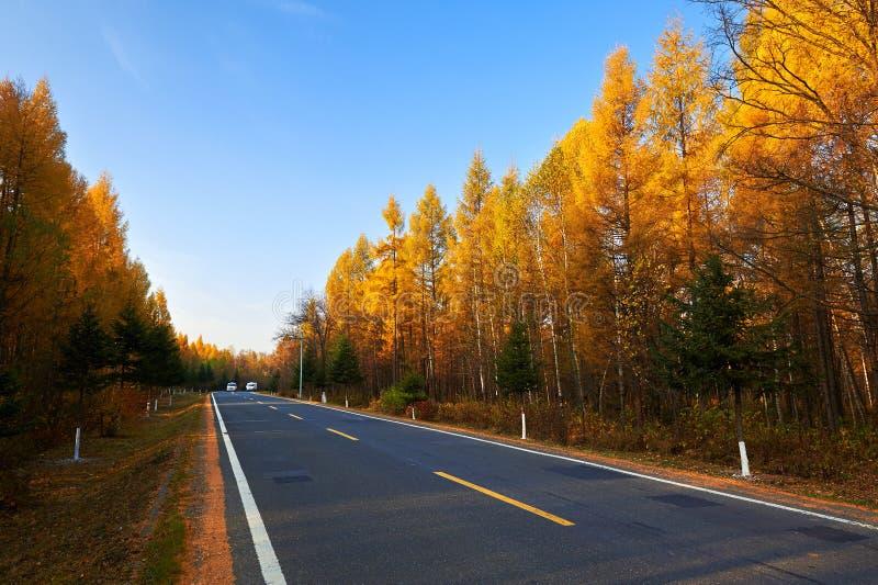 La foresta di autunno di beautifu immagine stock