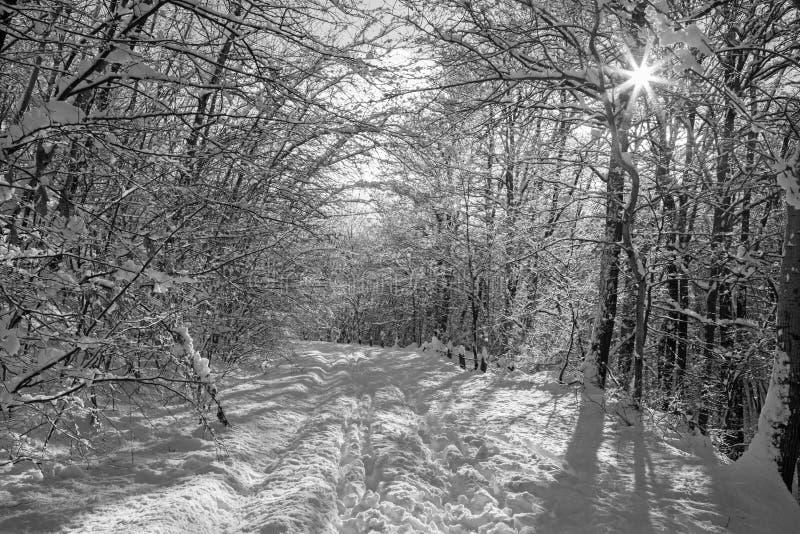 La foresta di inverno e la strada in piccole colline carpatiche - Slovacchia immagine stock
